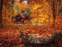 Там, където винаги е есен